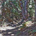 La Palma-Wanderung-SL-SC 14