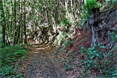 La Palma-Wanderung-Tagoja-Forststraße