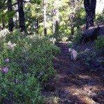 La-Palma-Wanderwege-Auf-dem-SL-EP-105