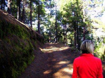 La-Palma-Wanderwege-Forststraße