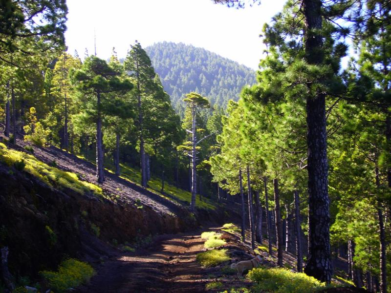 La-Palma-Wanderwege