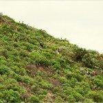 La Palma Wandern-Auf dem Wanderweg PR LP 5.1