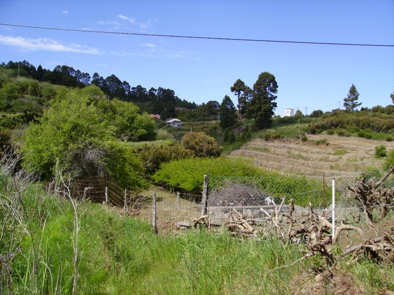 La-Palma-Wandern-Bei-Hoya-Grand