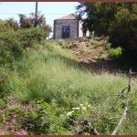 La-Palma-Wandern-Kurz-vor-Hoya-Grande-auf-dem-PR-LP-10