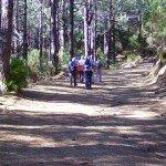 La-Palma-Wandern-Wanderweg-PR-LP-16-Forstpiste.jpg
