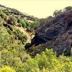 La Palma Wandern-Wanderweg PR LP 16.1 unterhalb des Vinijore