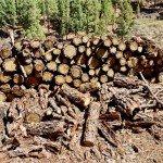 La Palma Wandern-Brennholz