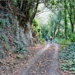 La Palma-Wanderung-Forstpiste