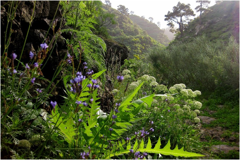 La Palma Foto-Auf dem Wanderweg GR130 bei Santo Domingo