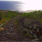 La-Palma-Wandern-Camino-Real