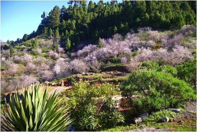 La-Palma-Wandern-Mandelblüte-im-Nordwesten