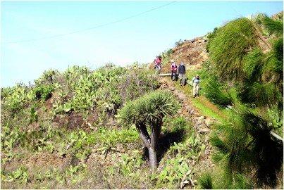 La-Palma-Wandern-Puntagorda-Barranco-San-Mauro