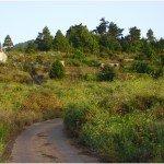 La-Palma-Wandern-Auf-der-Hochebene-Llano-de-Tenagua
