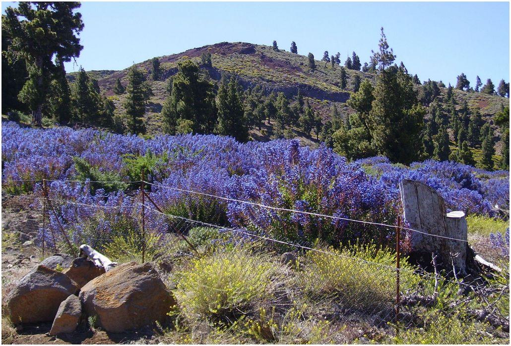 La-Palma-Wandern-Auf-der-Hochebene-Llanos-de-Las-Animas