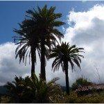 La-Palma-Wandern-Palmen