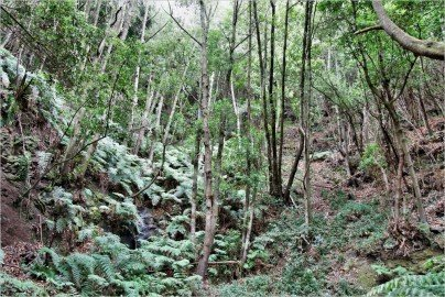 La Palma Wandern-Wanderweg LP 4.1