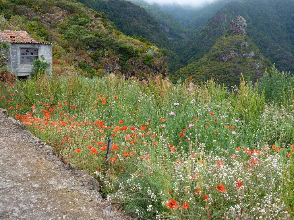 La Palma Wanderung-Im Barranco La Galga