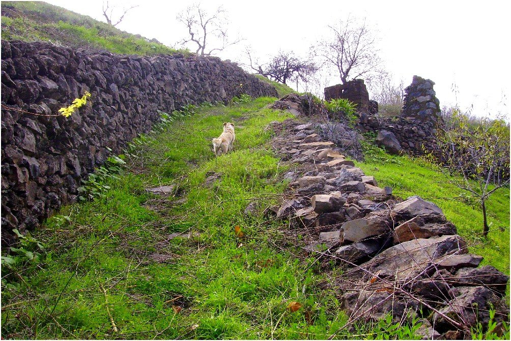 La-Palma-Wanderwege-Auf-dem-Wanderweg-LP-PR-10