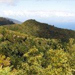 La Palma Wanderwege-Im Lorbeerurwald