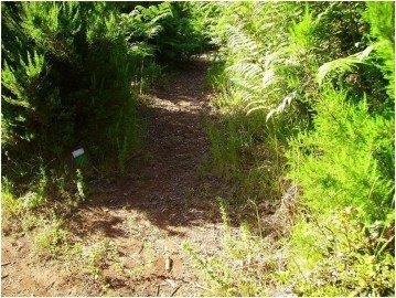 La-Palma-Wanderweg-SL-LP-131-1