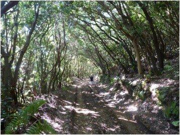 La-Palma-Wanderweg-SL-LP-131