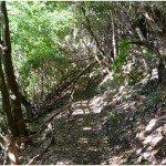 La Palma Wandern-Wanderung in Los Sauces Wanderweg LP 7.1