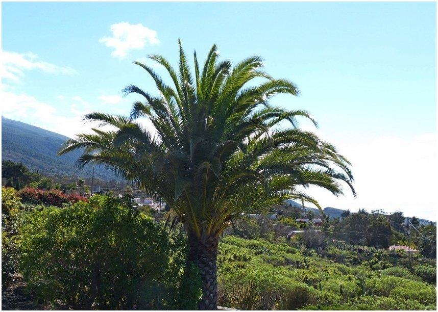 La-Palma-Traumwetter-im-November