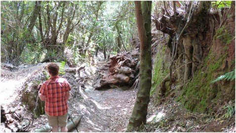 La Palma Wandern Auf dem Wanderweg PR LP 4