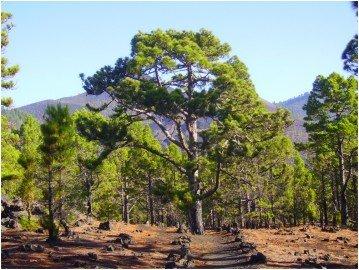 La Palma Wanderwege SL LP 110.