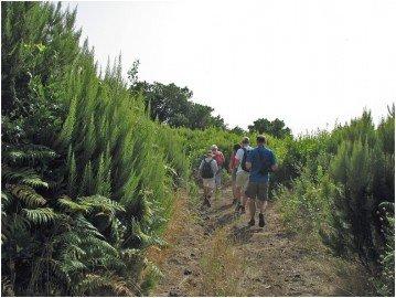 La Palma Wandern - Auf einer Spzierwanderung im Buschwald von La Palma