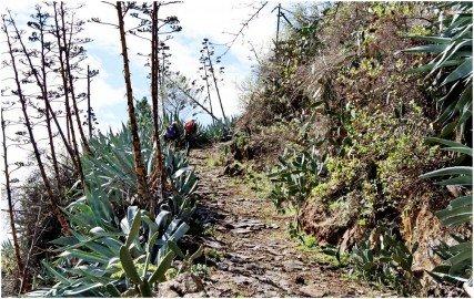 La Palma Wanderwege-Auf alten Pfaden