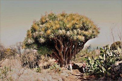 La Palma Wanderungen-zur Lomada Grande