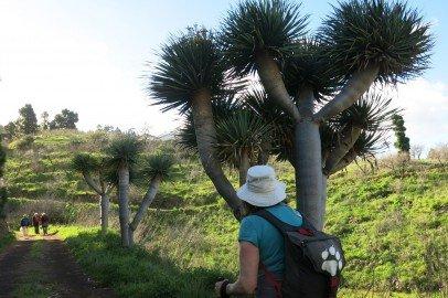 La Palma Wandern Rundwanderung El Castillo