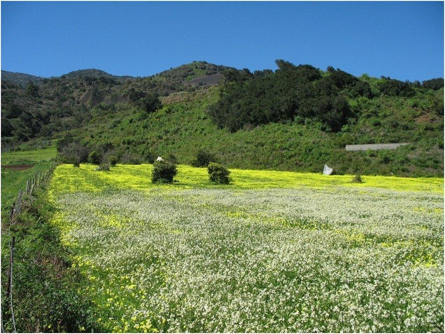 La Palma Bilder Blühende Wiese es ist Frühling auf La Palma