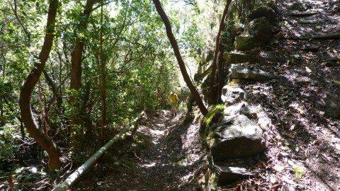 La Palma Wanderwege Wanderweg PR LP 4.1