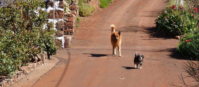 La Palma Wanderwege Die Hunde bewachen ihr Haus