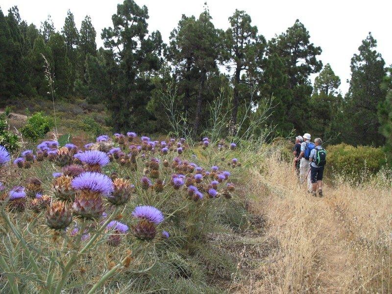 Auf einem Wanderpfad in Puntagorda La Palma