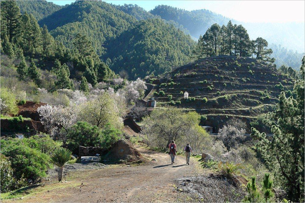 Wandern zu Zeit der Mandelblüte im Nordwesten von La Palma
