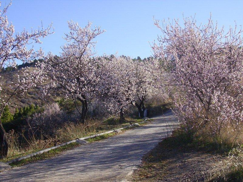 Puntagorda zur zeit der Mandelblüte