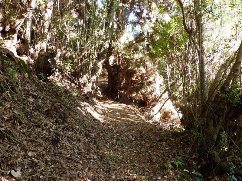 La Palma Wandern, Pfad im Barranco El Agua
