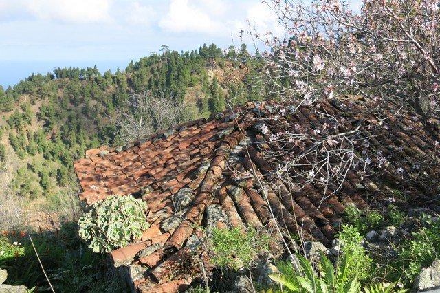 La Palma Wanderungen,El Castillo,Finca,Mandelblüte,