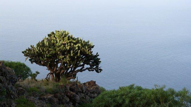 La Palma Wandern, Puntagorda, an der Steilküste