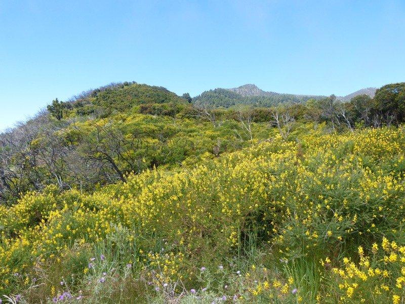 La Palma Wanderungen-Llano de Niquiomo