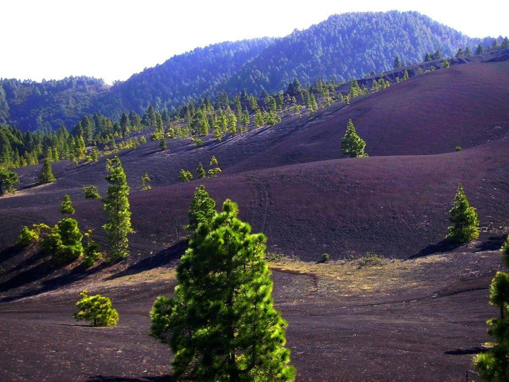 La Palma Wanderwege_der Wanderweg SL LP 101 führ zur Hochebene Llanos de Jable