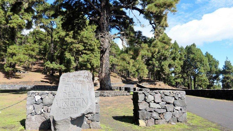 La Palma Wandern_Pino de La Virgen