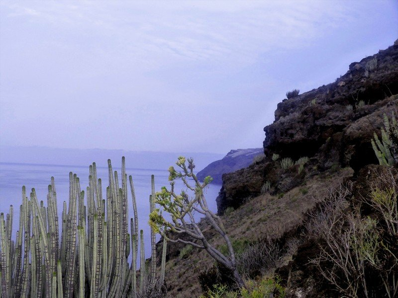 La Palma Wandern_beim Aufstieg durch die Steilwand