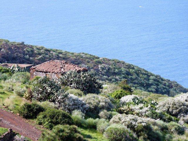 La Palma Wandern_auf dem Weg nach Puntagorda blühender Ginster