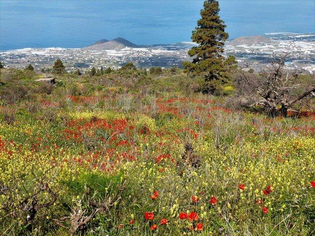 La Palma Wandern_Spaziergang Tacande1
