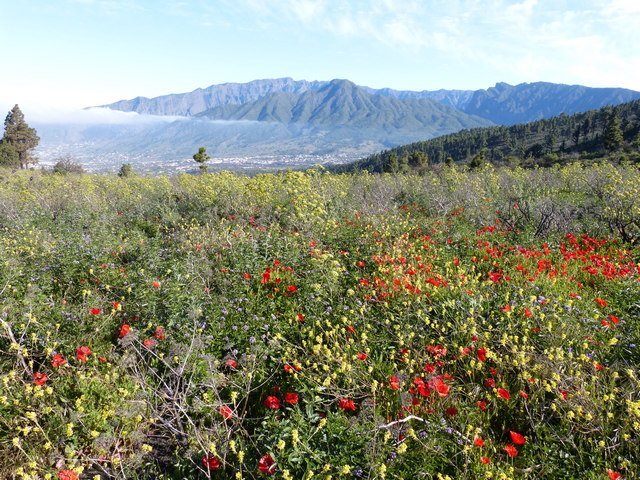 La Palma Wandern_Spaziergang Tacande3