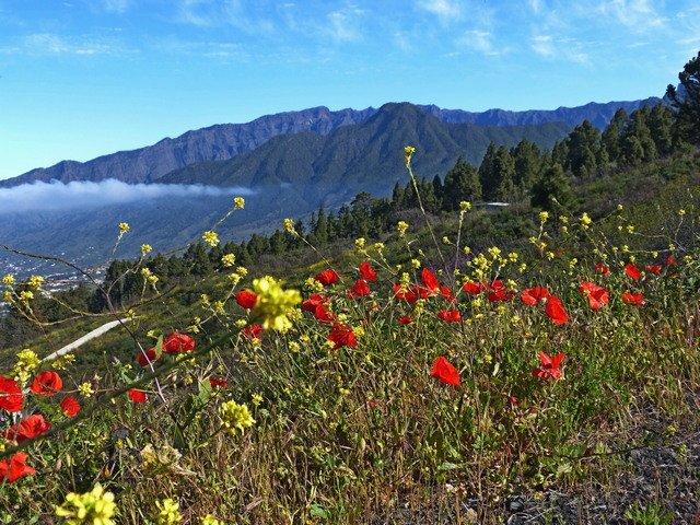 La Palma Wandern_Spazirgang Tacande2